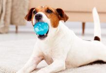 Kreatywne zabawki dla Twojego pupila - przegląd funkcjonalnych akcesoriów dla psów i kotów
