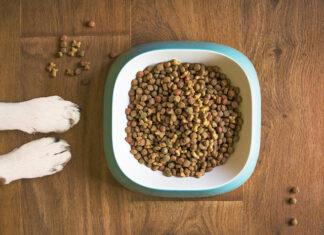 karma dla psa sucha