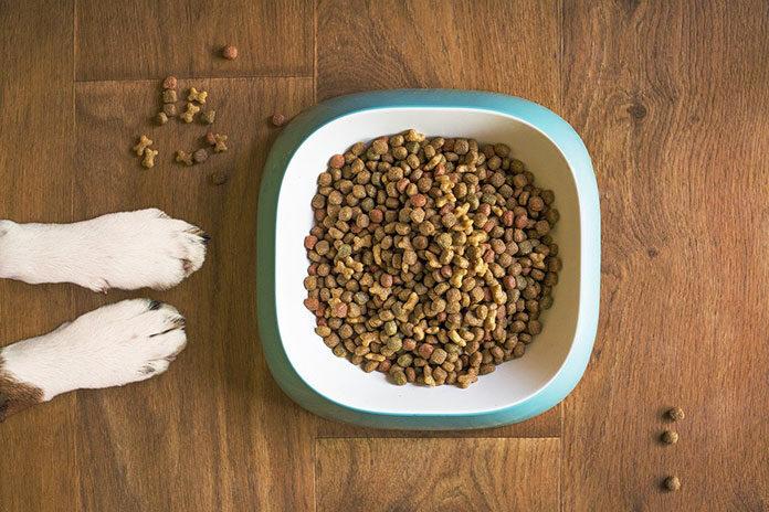 karma dla psów