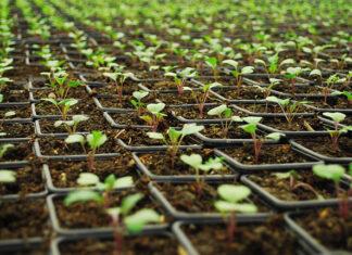 Sklep z nasionami Legutko – miejsce w sieci dla pasjonatów ogrodnictwa